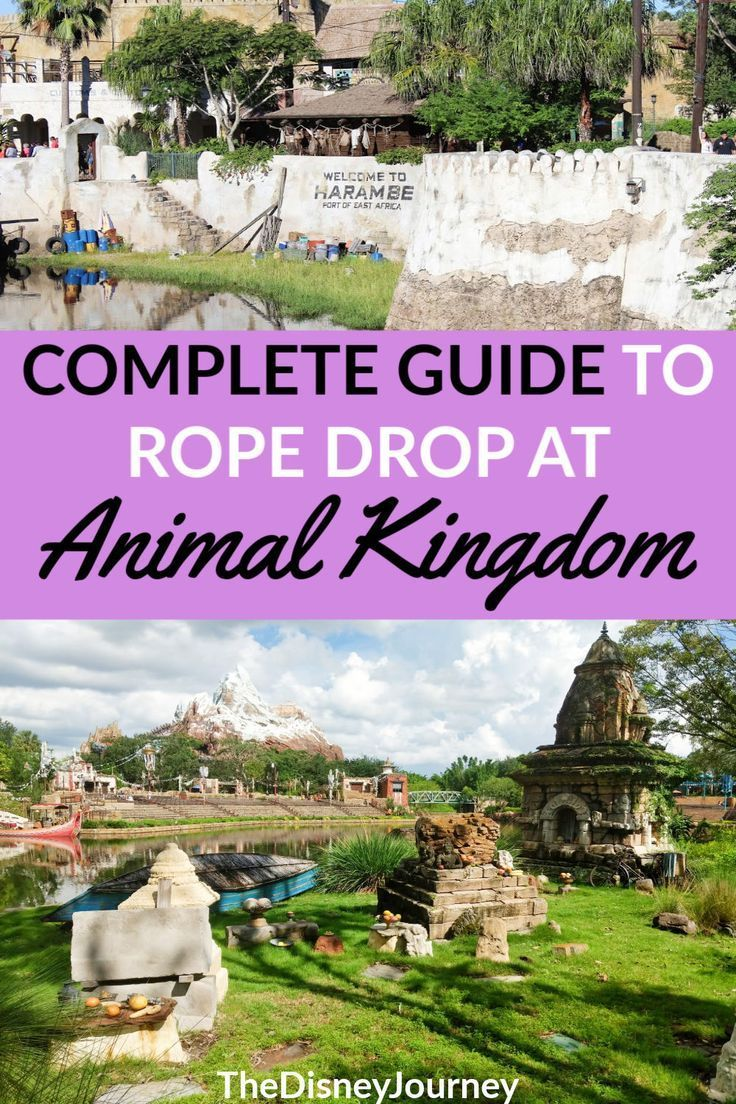 How To Rope Drop Animal Kingdom (With Images)