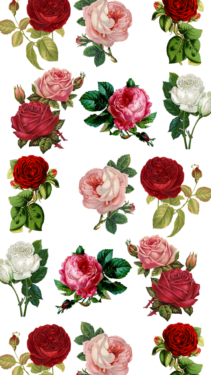 Roses IPhone 8 Wallpaper