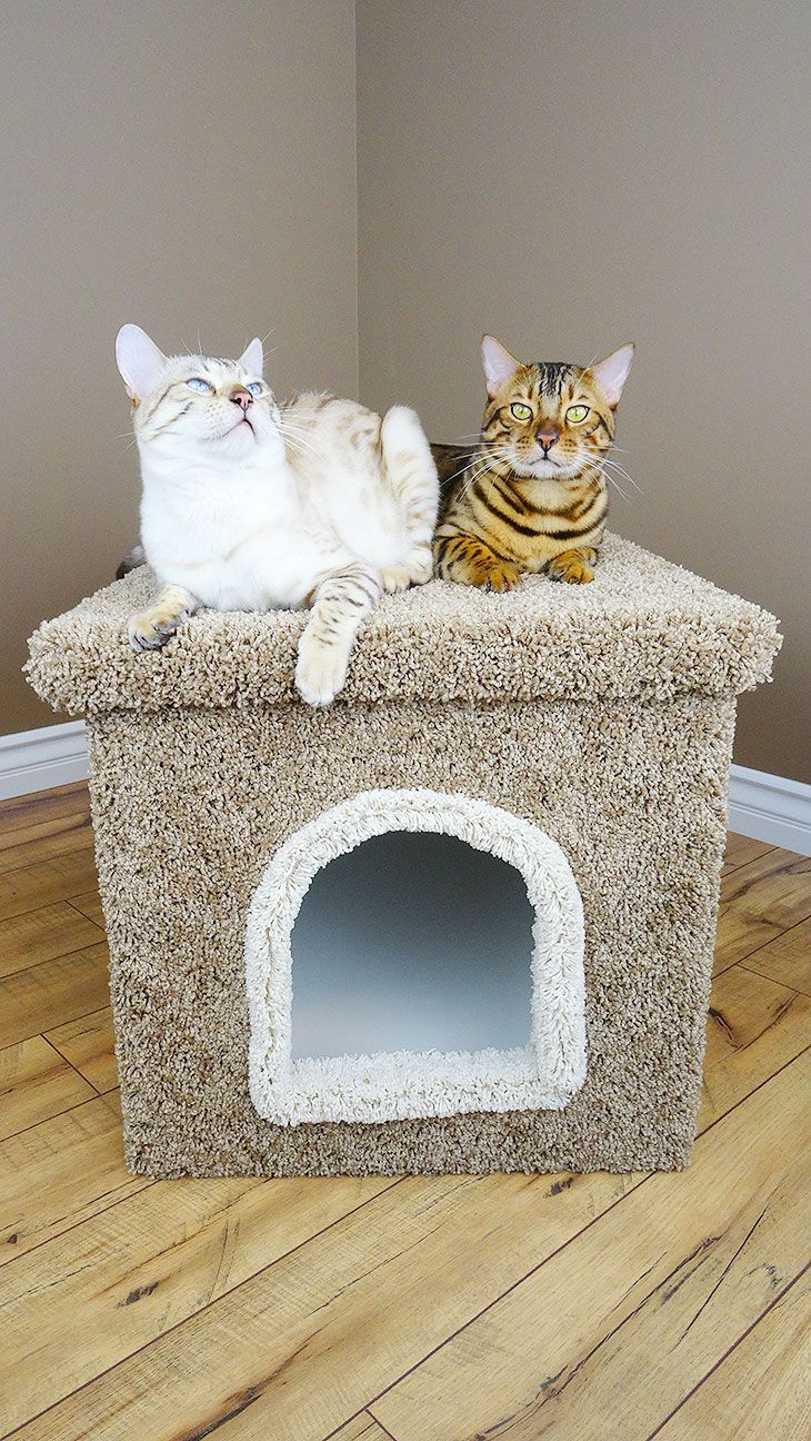 Premier Litter Box Enclosure Litter box enclosure
