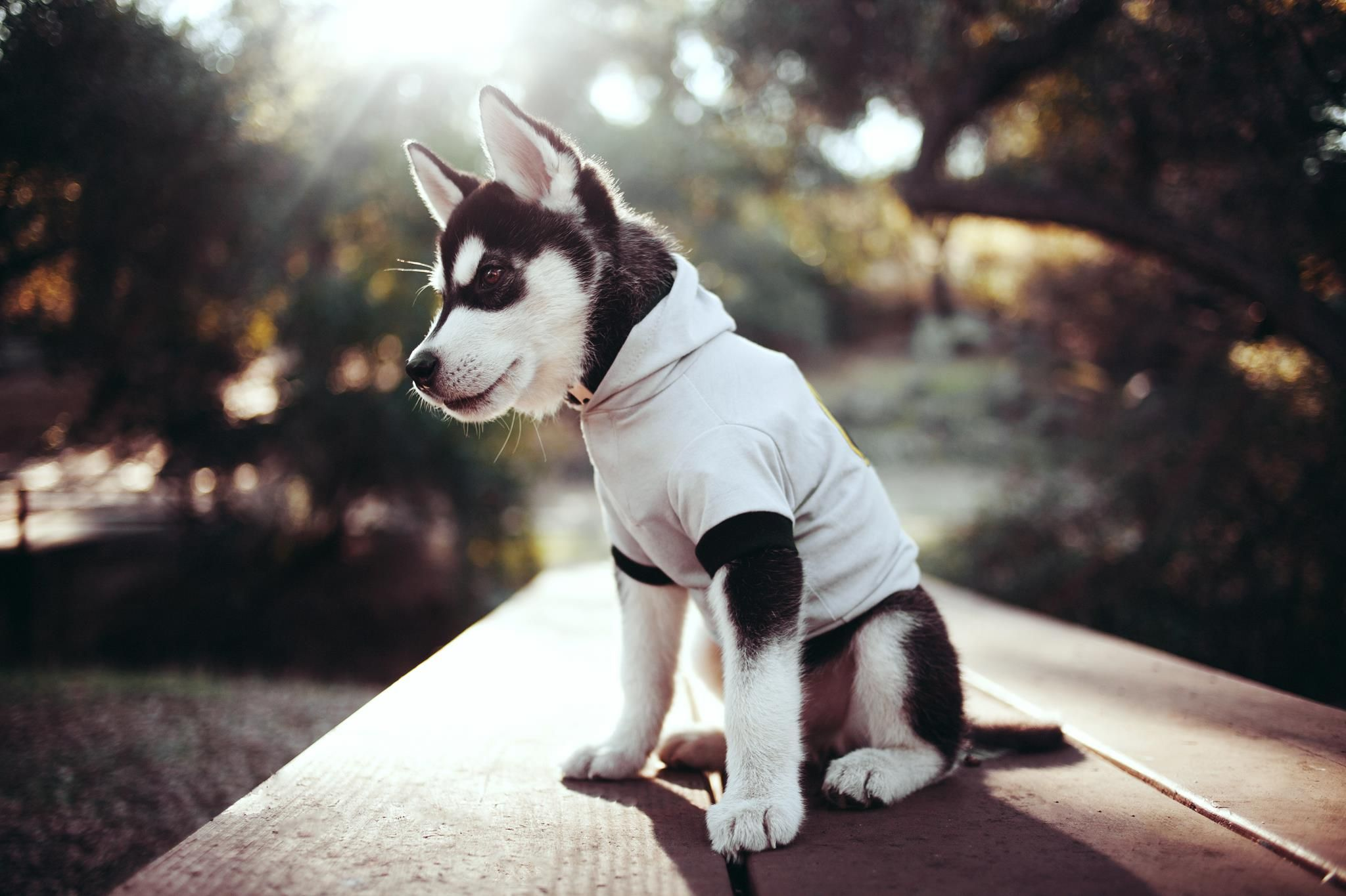The Best Dog Breeds Cute Animals Husky Puppy Siberian Husky Dog