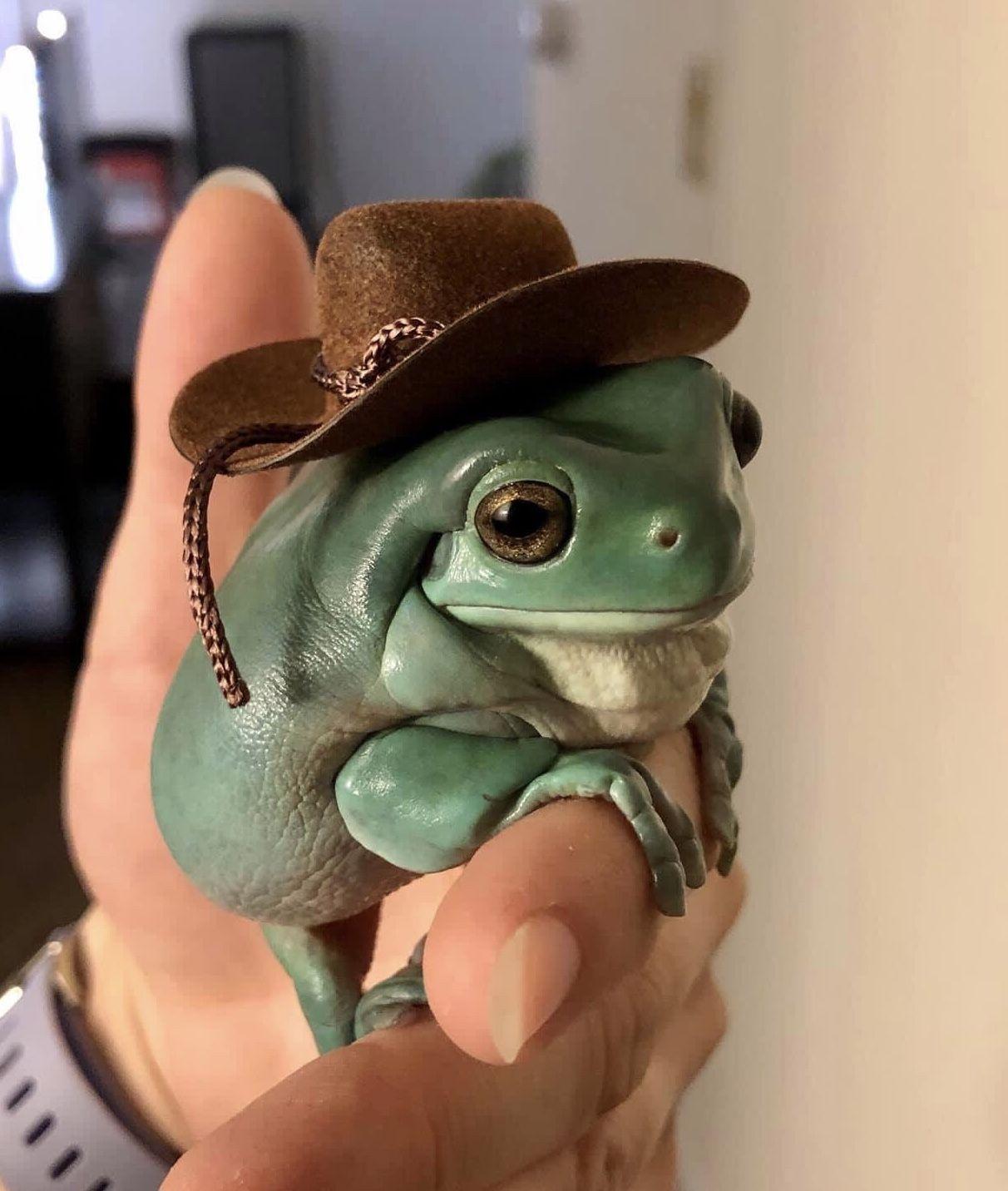 aes.┊finncore image by ˗ˏˋ finn ˎˊ˗ in 2020 Cute frogs