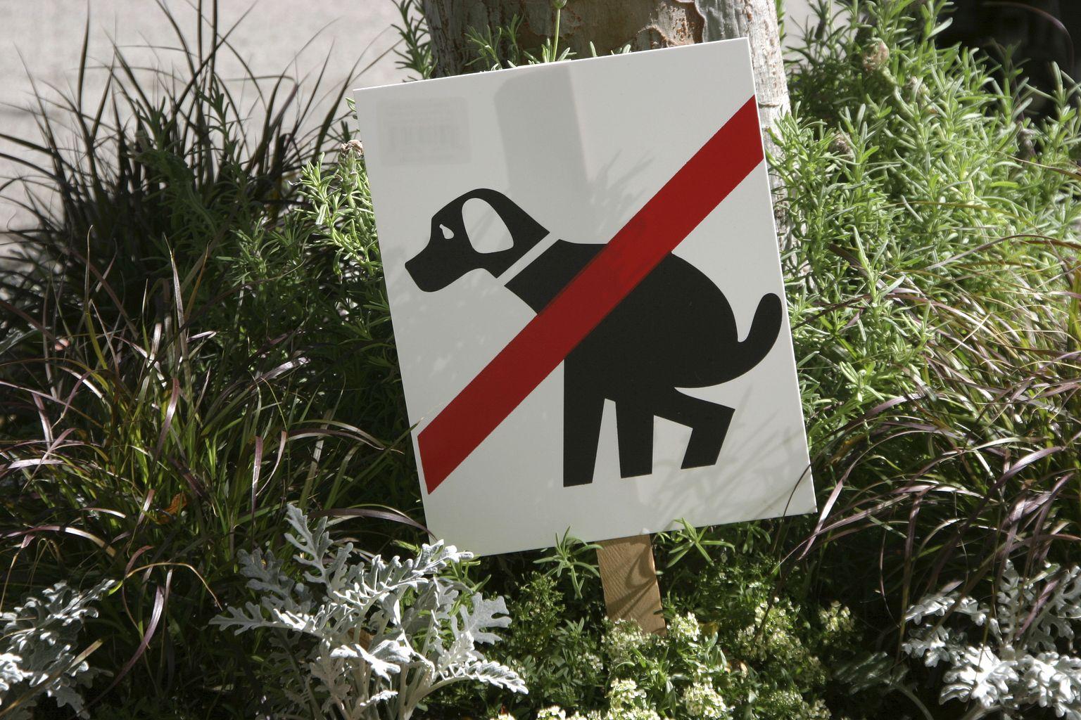 Cómo Evitar Que Los Perros Orinen Las Plantas Orina De Perro Perros Espacios Para Perros