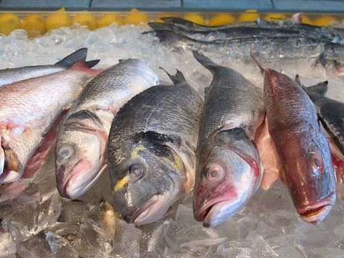 Check out our updated Gallery.  gcseafoodconsultants' photostream