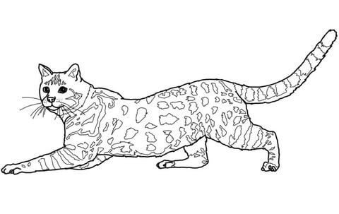 Savannah Cat Coloring Page From Cats Category. Select From 27197 Printable  Crafts Of Cartoons, Nature, Animals, Bible And Many More.