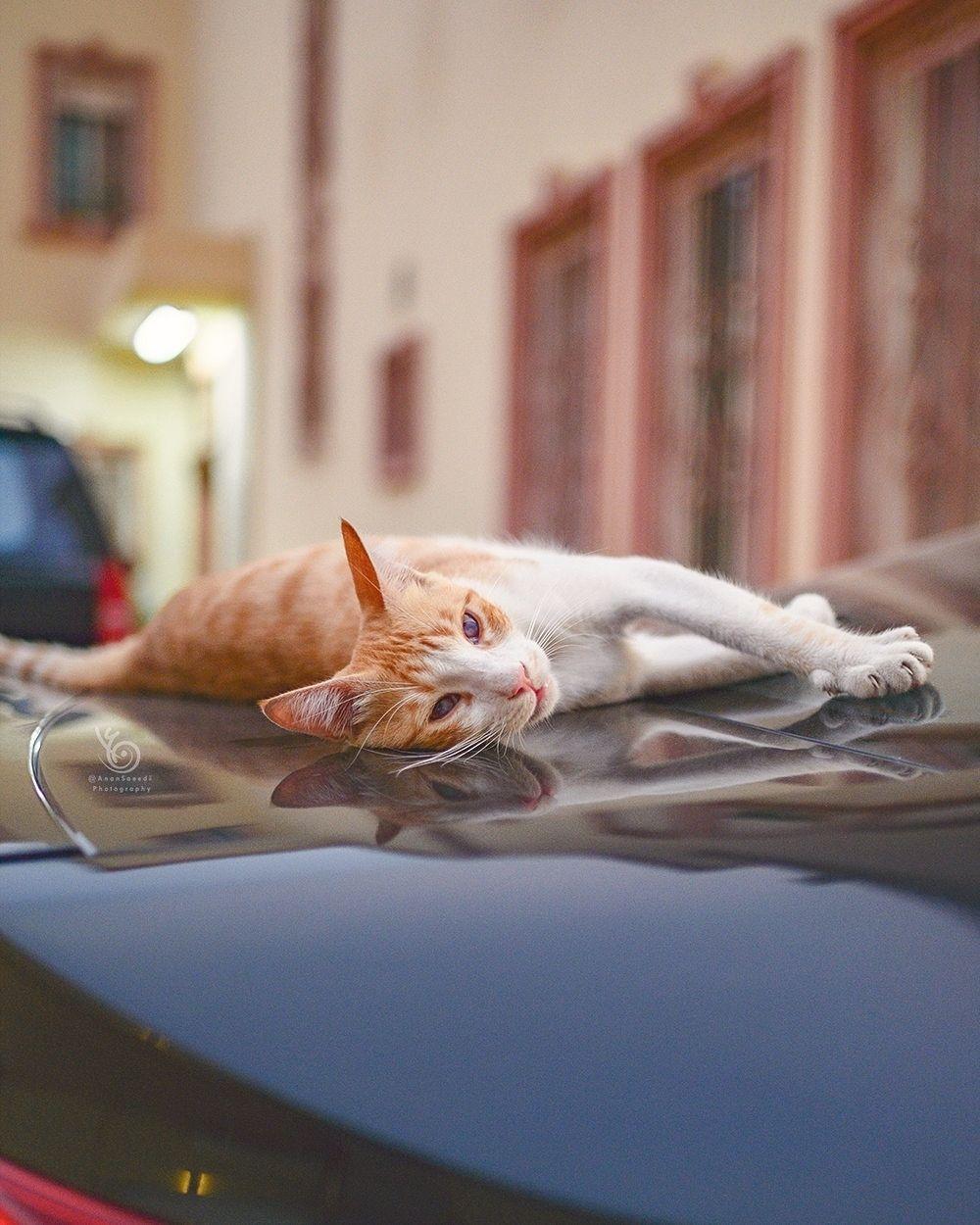 Happy Lazy Monday Instagram Bridge Happy Lazy Monday Adoptdontshop Most Beautiful Cat Breeds Cats Beautiful Cat Breeds