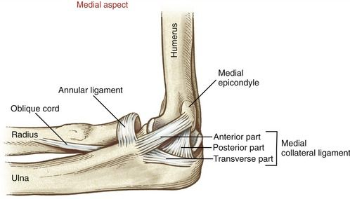 d4eabbf6a39a8e53c054a2ae5a678509 image result for medial collateral ligament elbow med geek