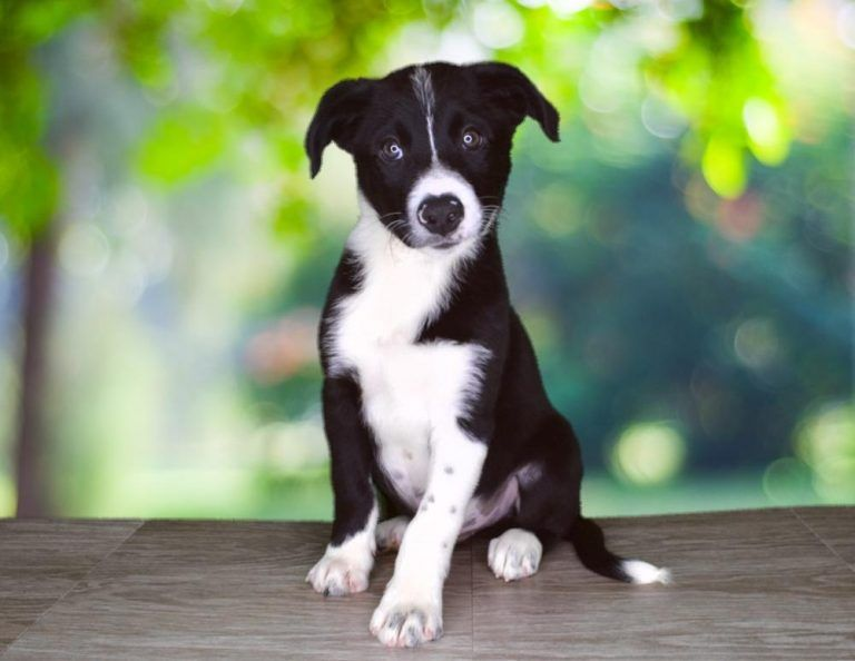 Available Dogs For Sale Puppies Dogs Dogs For Sale