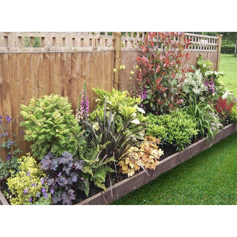 Shady Border Collection 3m X 60cm Garden Border Plants Plants