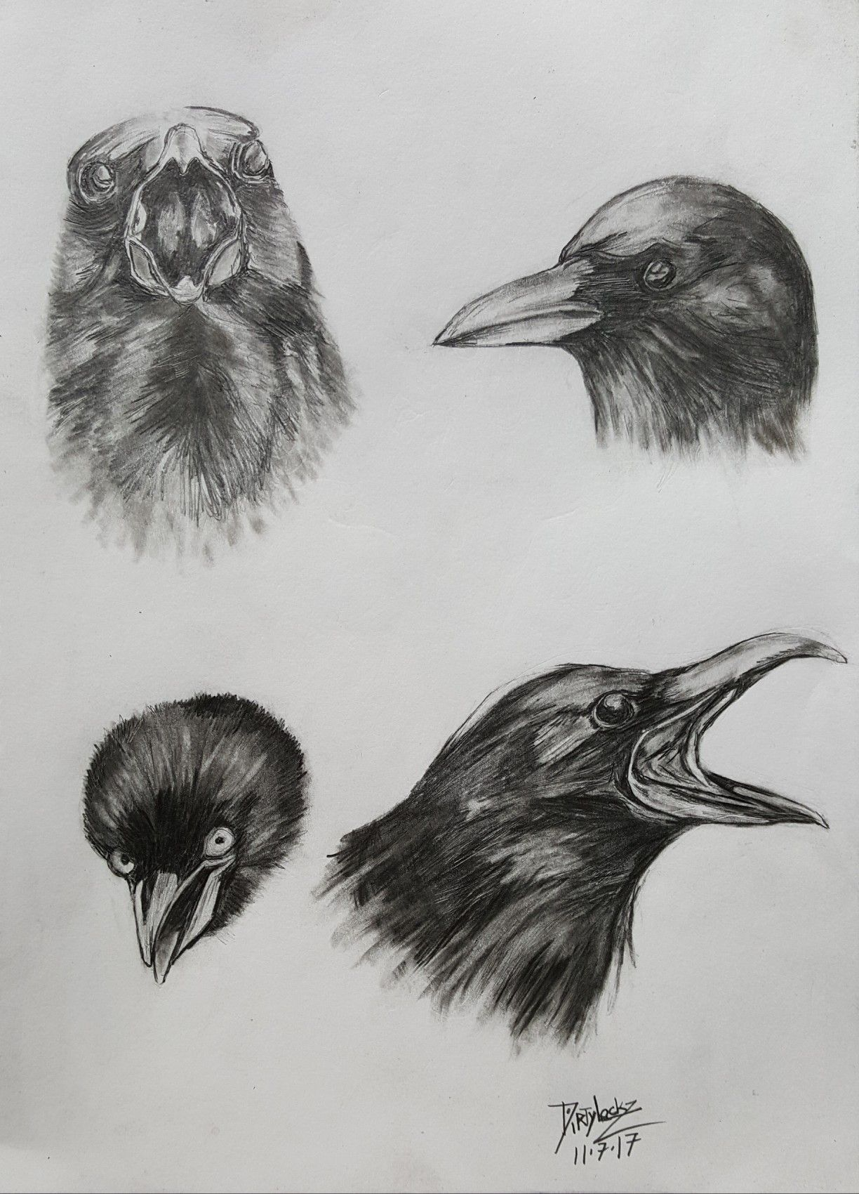Crow pencil drawing pencil art in 2019 pencil drawings pencil