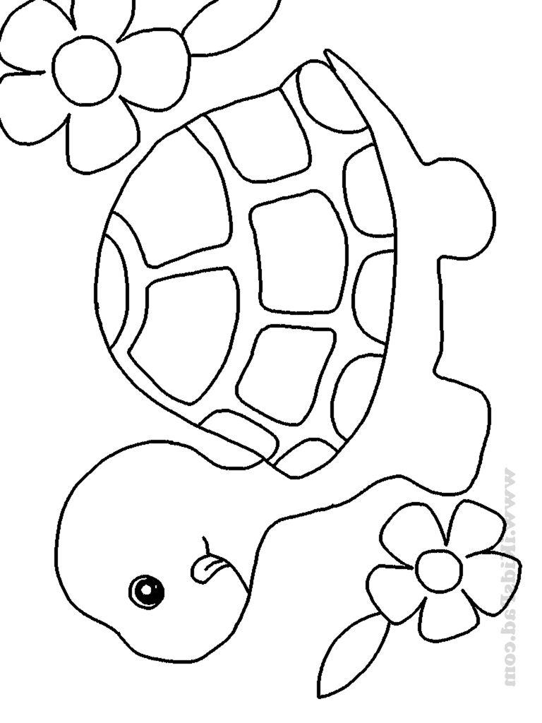 Pin de Hayde González en tortuga | Pinterest | Tortuga