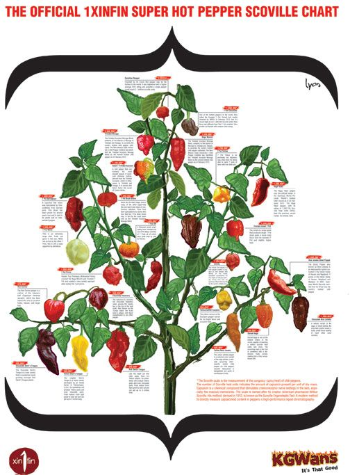 1xinfin S Super Hot Pepper Plant Scoville Chart Stuffed Hot Peppers Stuffed Peppers Super Hot Peppers