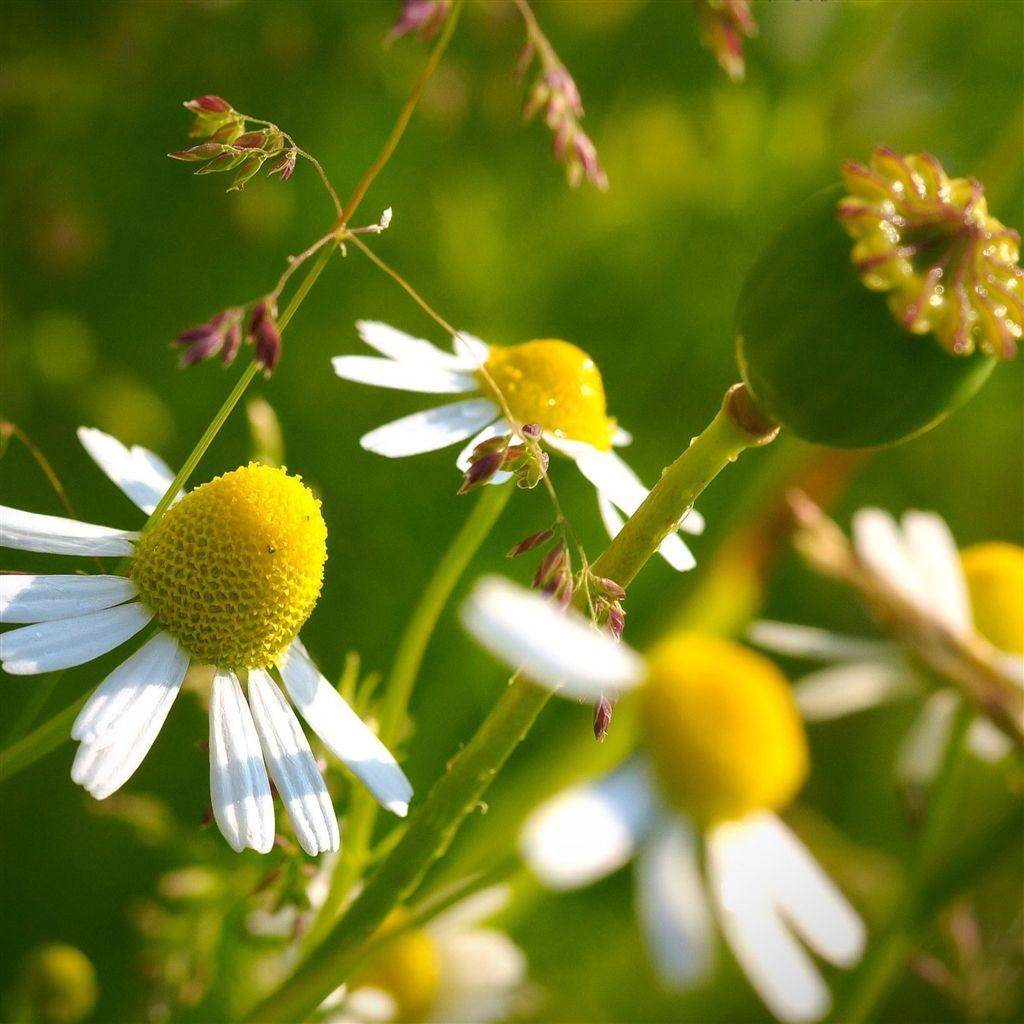 Nature Little Flower Towards Sunlight iPad Air