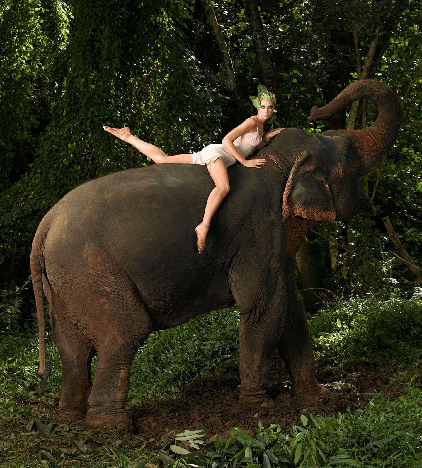 83e3589a76bd39 Sara Albert - Posing on an elephant for Venus Vibrance - Photo by Pongsak  Tangtiwaja - Cycle 6