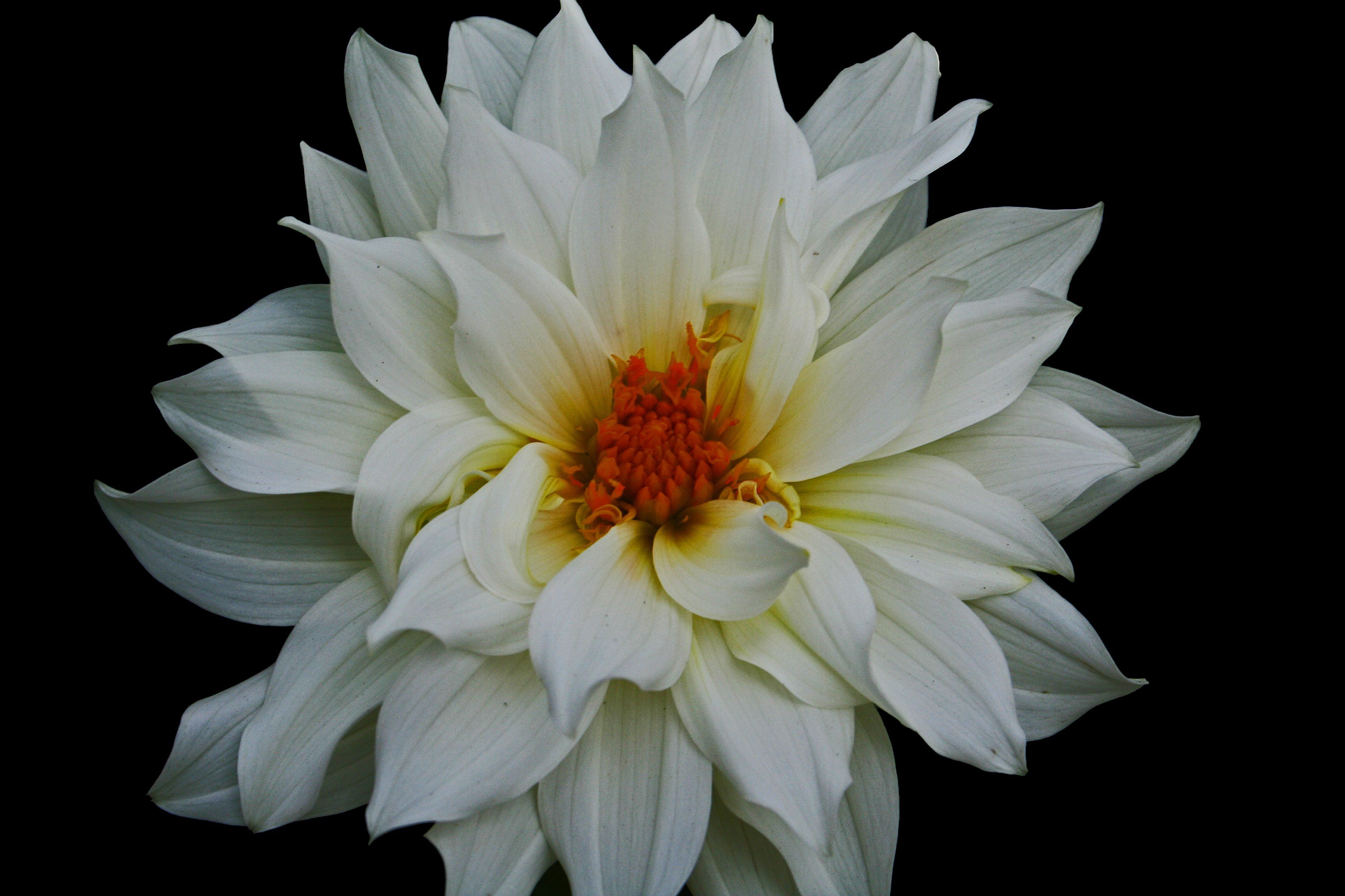 100 Types Of The Most Beautiful White Flowers For Your Garden