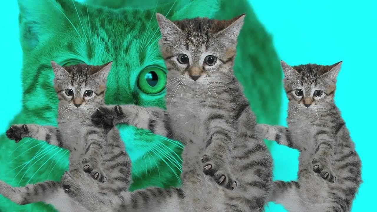 """""""Best Kittycat Song feat. Grumpy Cat"""" entstand 2013 im Modul """"Viral Video"""" in der Studienvertiefung Cast / Audiovisuelle Medien an der Zürcher Hochschule der Künste und ist mit weit über 1 Mio Views das erfolgreichste Youtube-Video das von Cast / Audiovisuelle Medien produziert wurde."""
