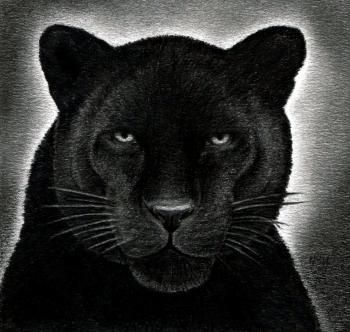 how to draw a black panther, realistic panther | ART ...