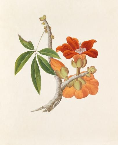 RHS Prints