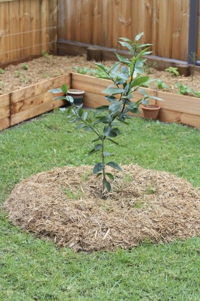 Fruit Trees In Garden Design – Ideas For Planting Fruit Trees In The ...