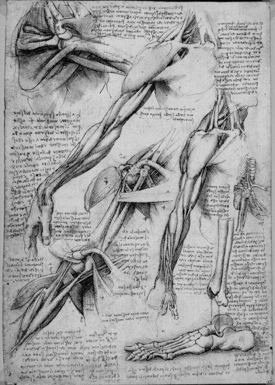 Leonardo\'s notebooks   I draw dat.   Pinterest   Anatomía, Dibujo y ...