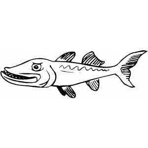Barracuda Animal Coloring Pages Angry Barracuda Jpg 300 300