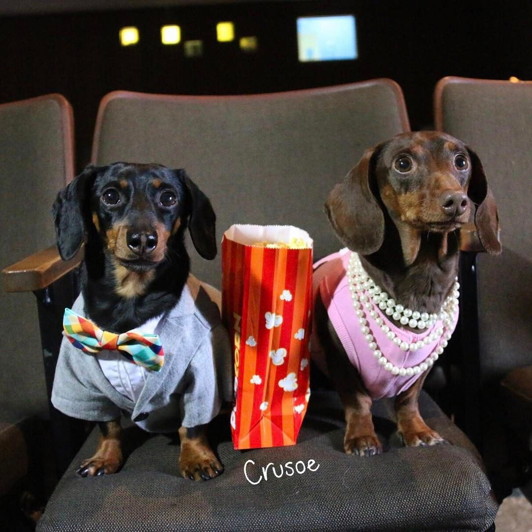 Took Bae To The Movies Crusoe Valentines Valentinesdate