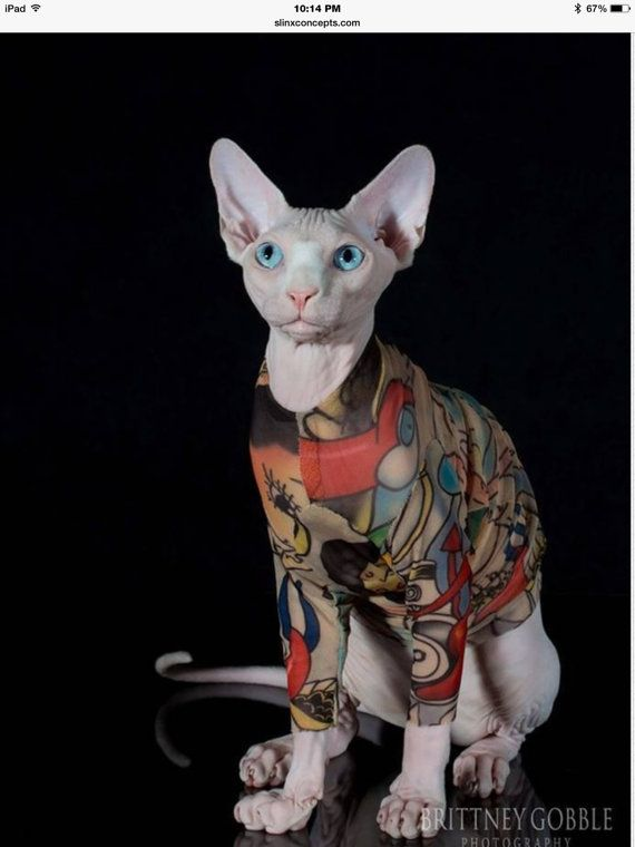Long Sleeve Sphynx Cat Clothes Rock A Billy By Tattcat Sphynx Cat Clothes Cat Sweaters Cat Clothes