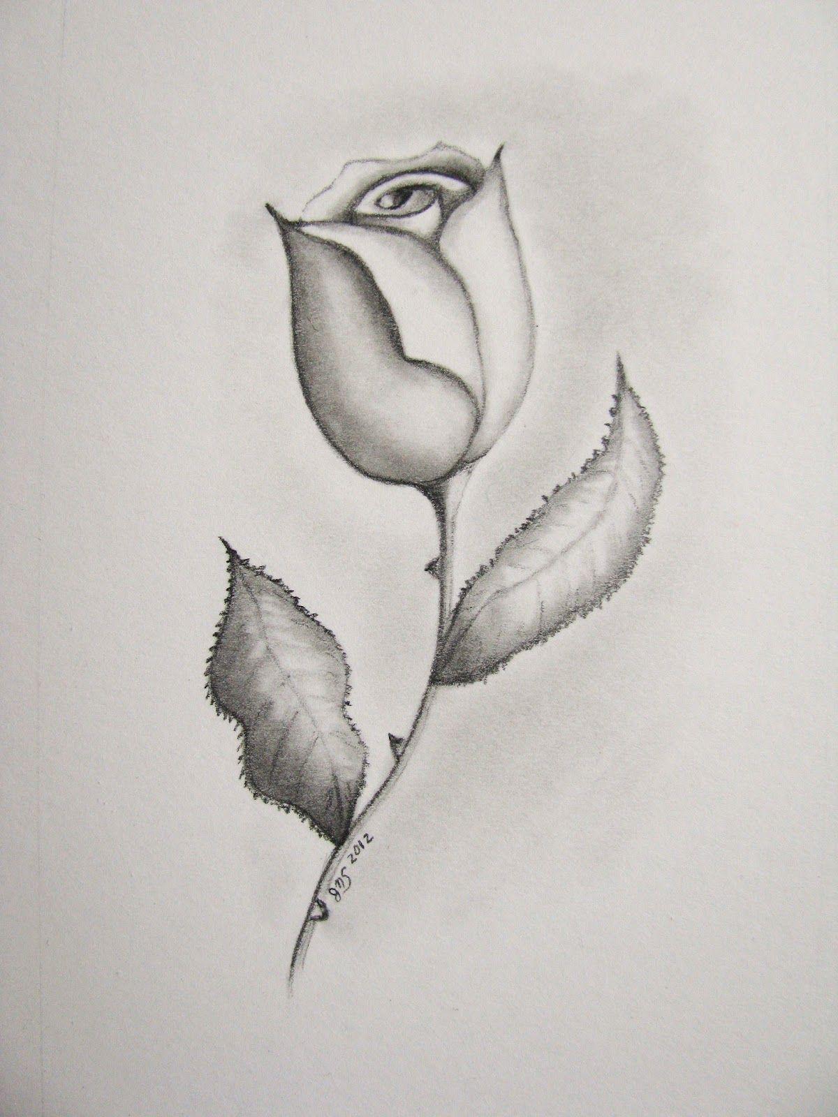 Pencil drawings of roses jills artstuff