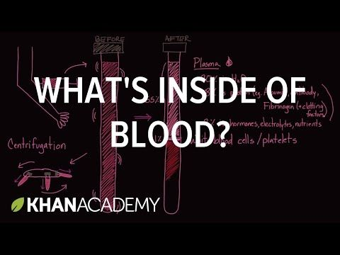 Whats Inside Of Blood Hematologic System Introduction Human