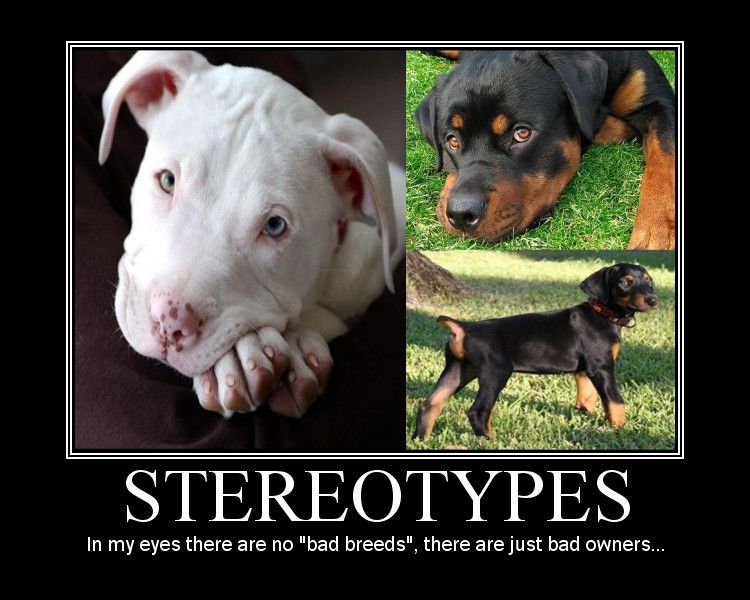 Vicious Dog Stereotypes By Thewsb Deviantart Com On Deviantart
