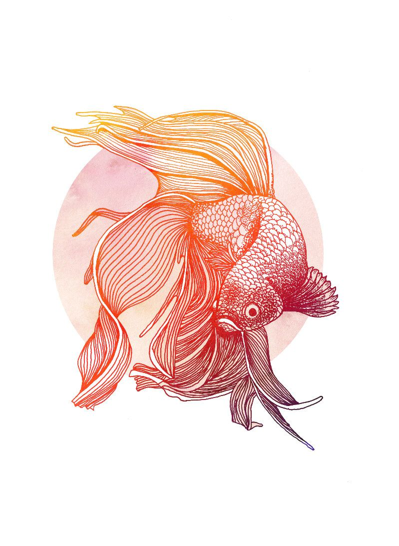 Red Siamese Fighting Fish Print Betta Illustration In Red And