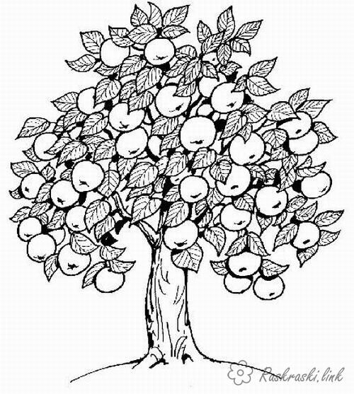 Яблоня, яблоки | Раскраски, Искусство, Рисунки