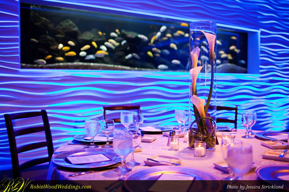 Newport Aquarium Cincinnati Ohio Wedding Photos Google Search