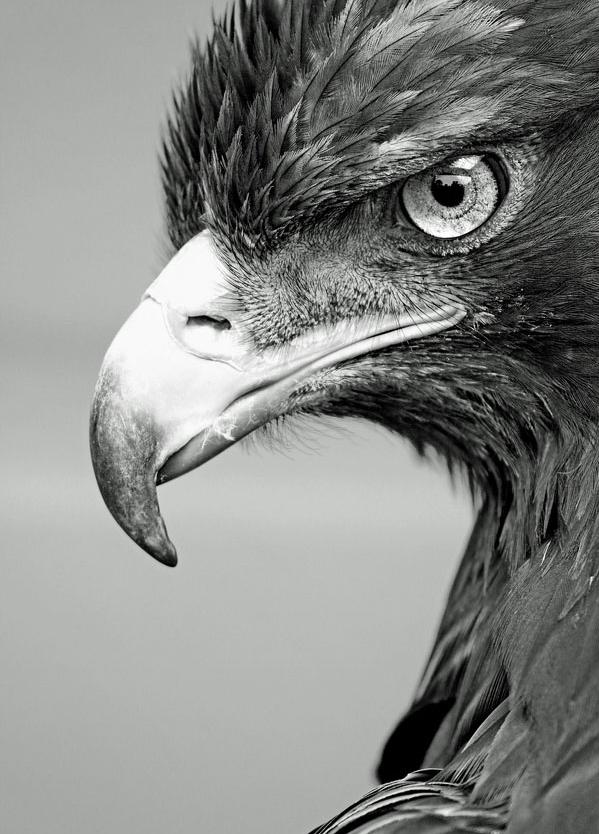Bjg μαύρο πουλί