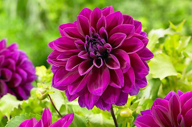 Top 10 Biggest Blooms For Your Flower Garden Flower Farm Bulb Flowers Purple Flowers Garden
