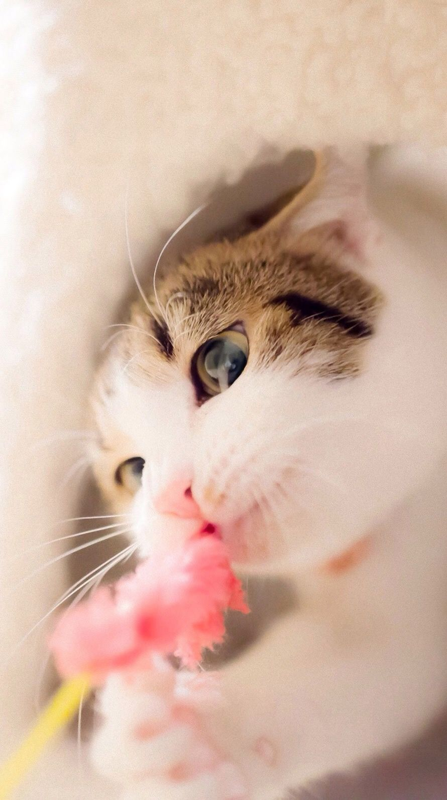 Pin By Nurul On Hello Animals Cute Cat Wallpaper Cute Cats