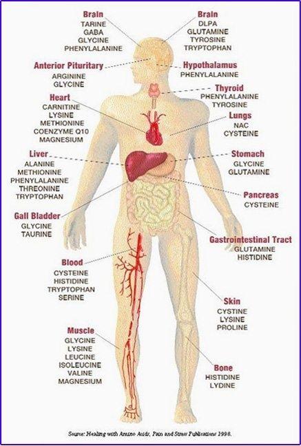 Amino Acid Body Chart .. … | Pinteres…
