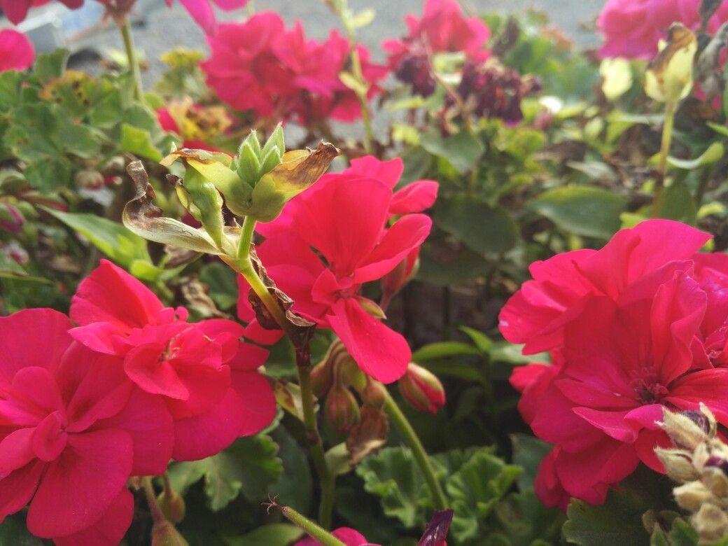 Flower colors | Colores de México | Pinterest | Flower colors