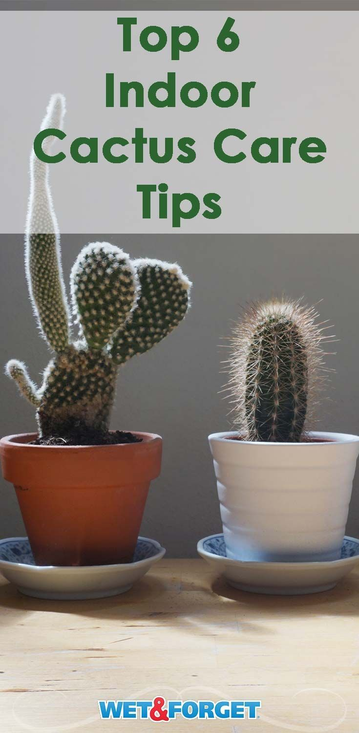 Photo of Caring for your indoor cactus is easy when following these 6 essential tips!