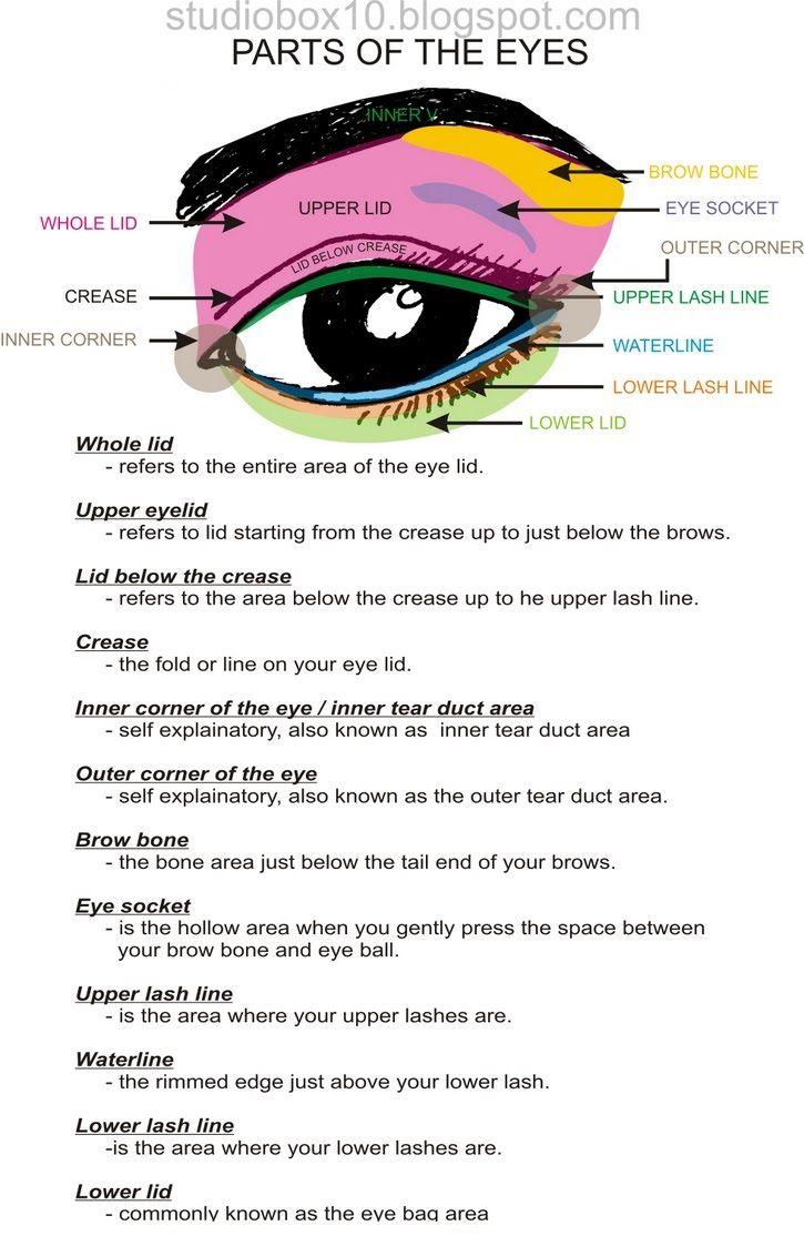 Eye makeup diagram for asians crease eye makeup diagram for asians ccuart Image collections