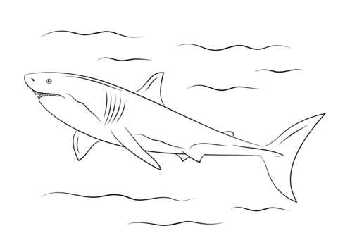 Great White Shark Coloring Page From Category