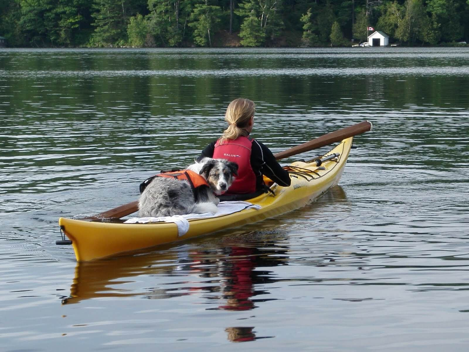 Find The Best Kayak For Dogs In 2017 Discover The Top 6