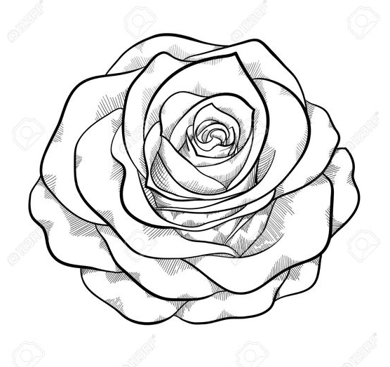 Simple And Awesome Rose Flowers Drawing Rose Drawing Simple Rose Drawing Black And White Drawing