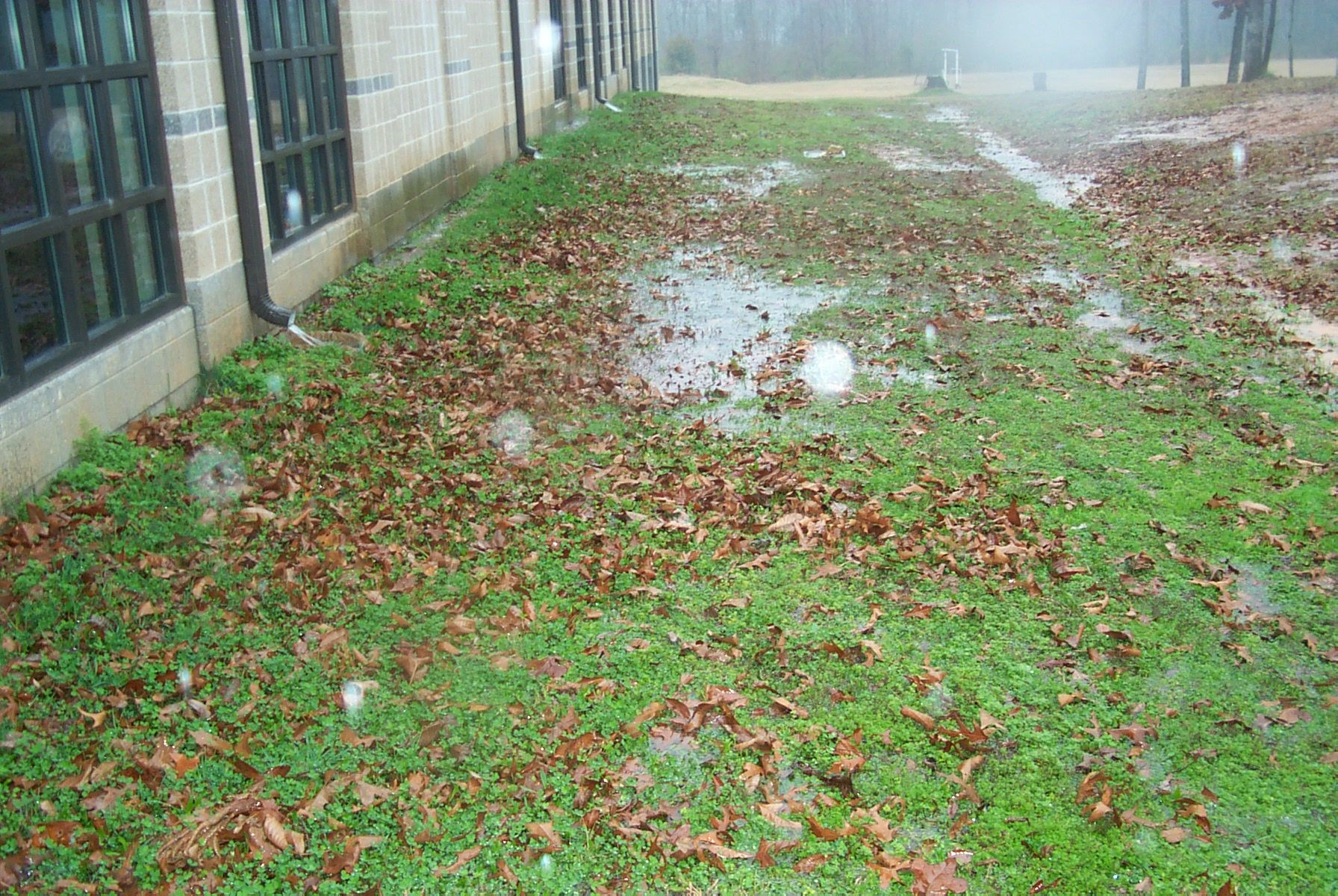 Waterpuddles In Your Yard Are A Sign Of Drainage Problems ...