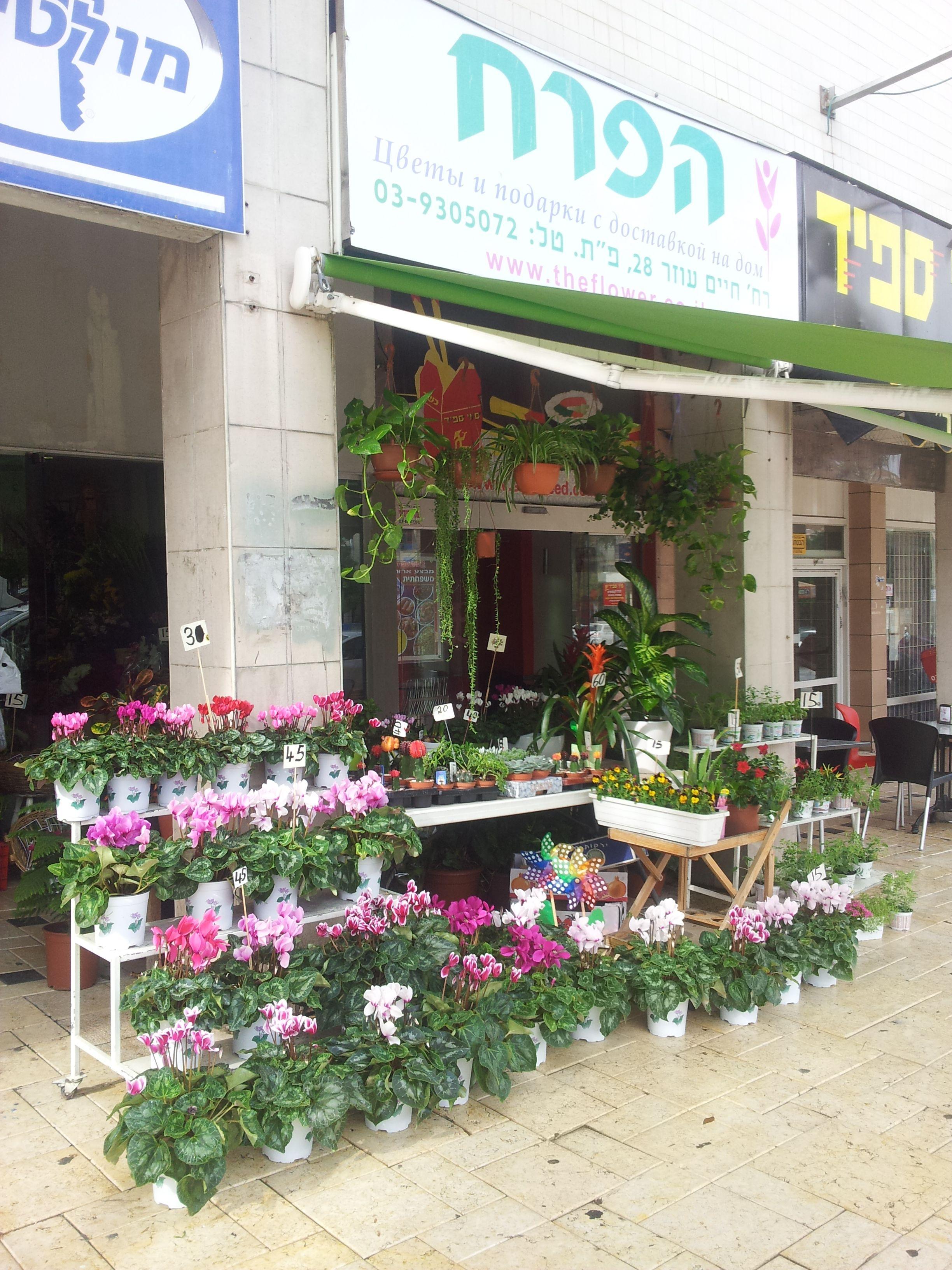 חנות פרחים הפרח פתח תקווה