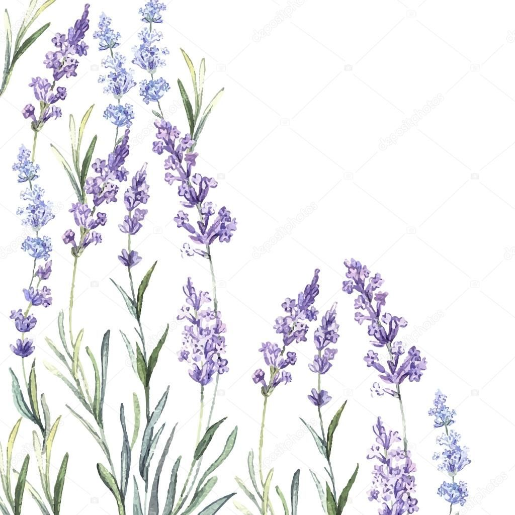 Depositphotos 62069041 Stock Illustration Watercolor Background Of Lavender Jpg 1024 1024 Background Vintage Watercolor Background Watercolor