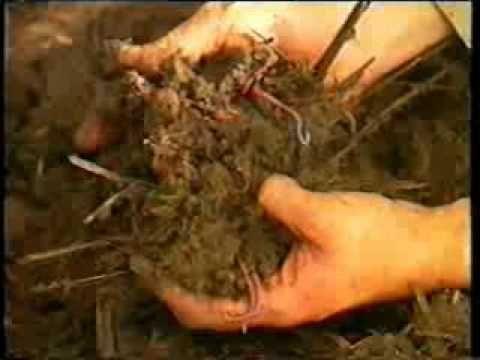 Como hacer un criadero de lombrices y su reproduccion for Como hacer un criadero de carpas