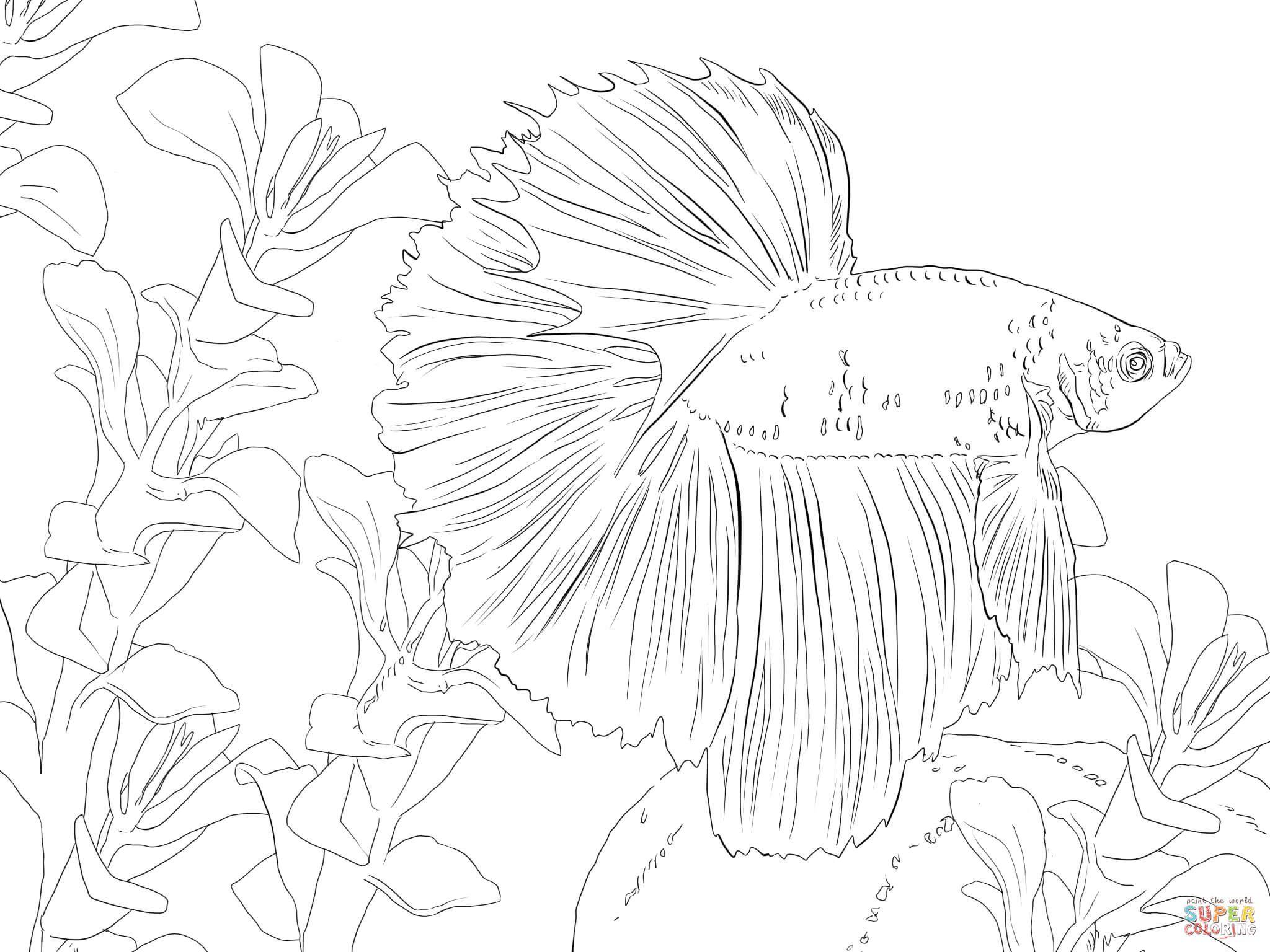 Dibujo de Pez Beta   ARTE  Pinterest  Dibujos de peces