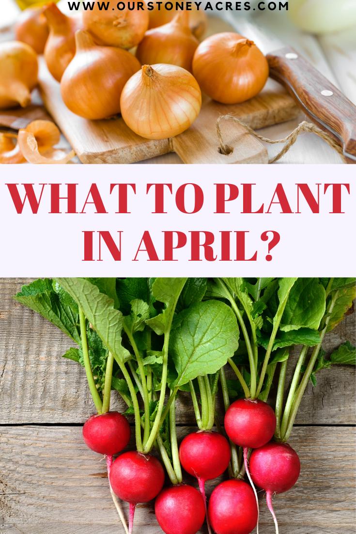 April Planting Guide Zones 5 6 Our Stoney Acres Food Garden Backyard Vegetable Gardens Plants