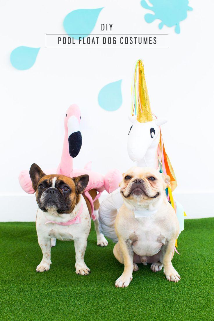 Diy Pool Float Costume For The Pups Diy Dog Costumes Cute Pool