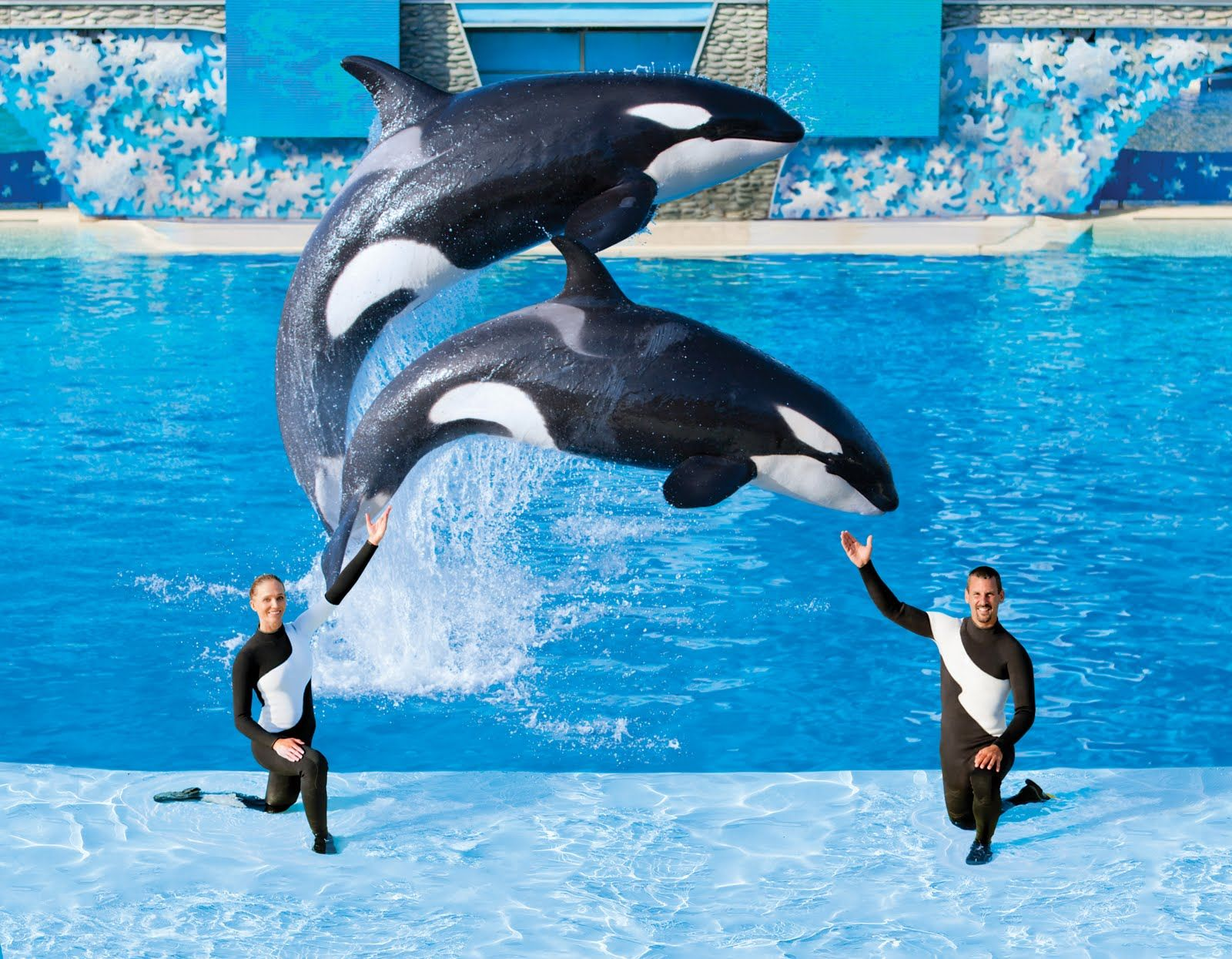 The+Humane+Society+of+the+United+States+(HSUS)+commends+SeaWorld+for ...